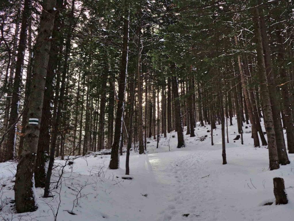Skrzyczne, zielony szlak w zimie