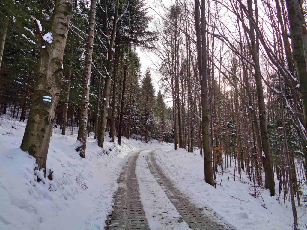 Skrzyczne, zielony szlak zimą