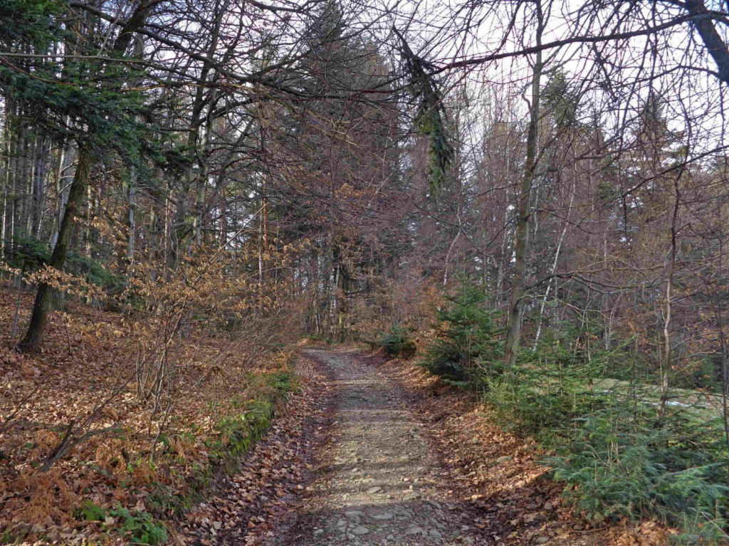 Niebieski szlak koło Myślenic