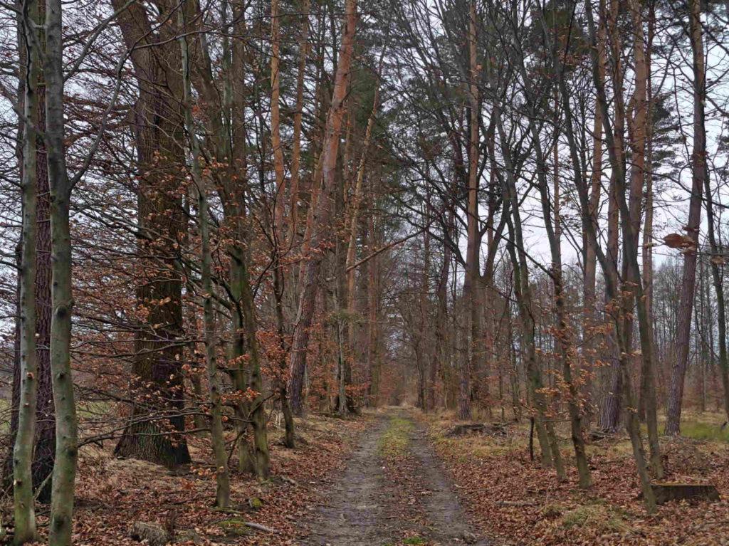 Czernichów, czerwony szlak