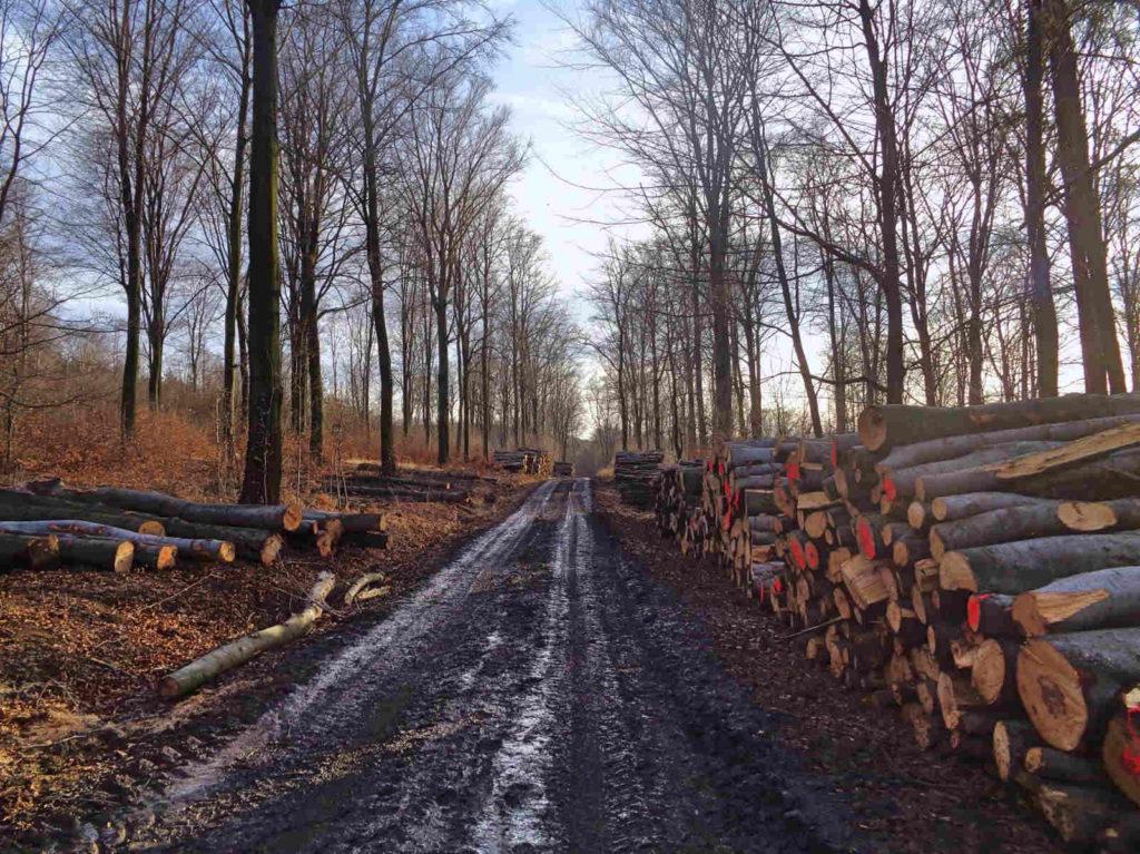 Zrywka drewna w lesie