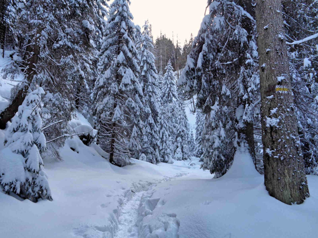 Wąwóz Kraków, szlak w zimie