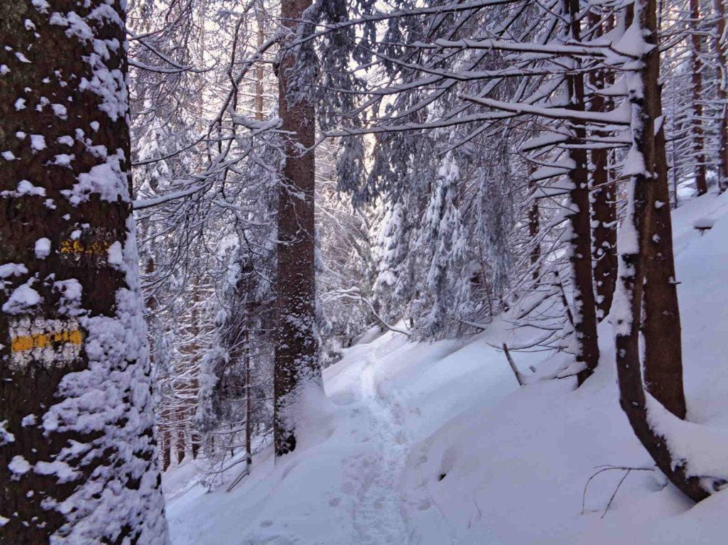Wąwóz Kraków, zejście zimą