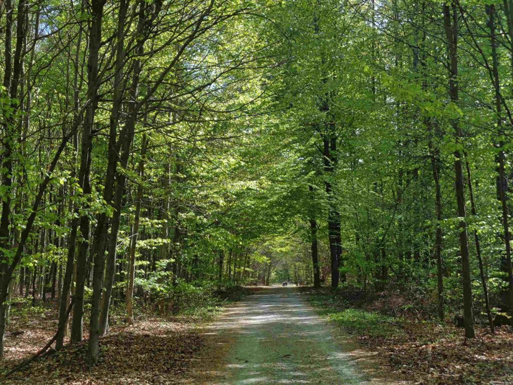 Czerwony szlak nordic walking w Lesie Zabierzowskim