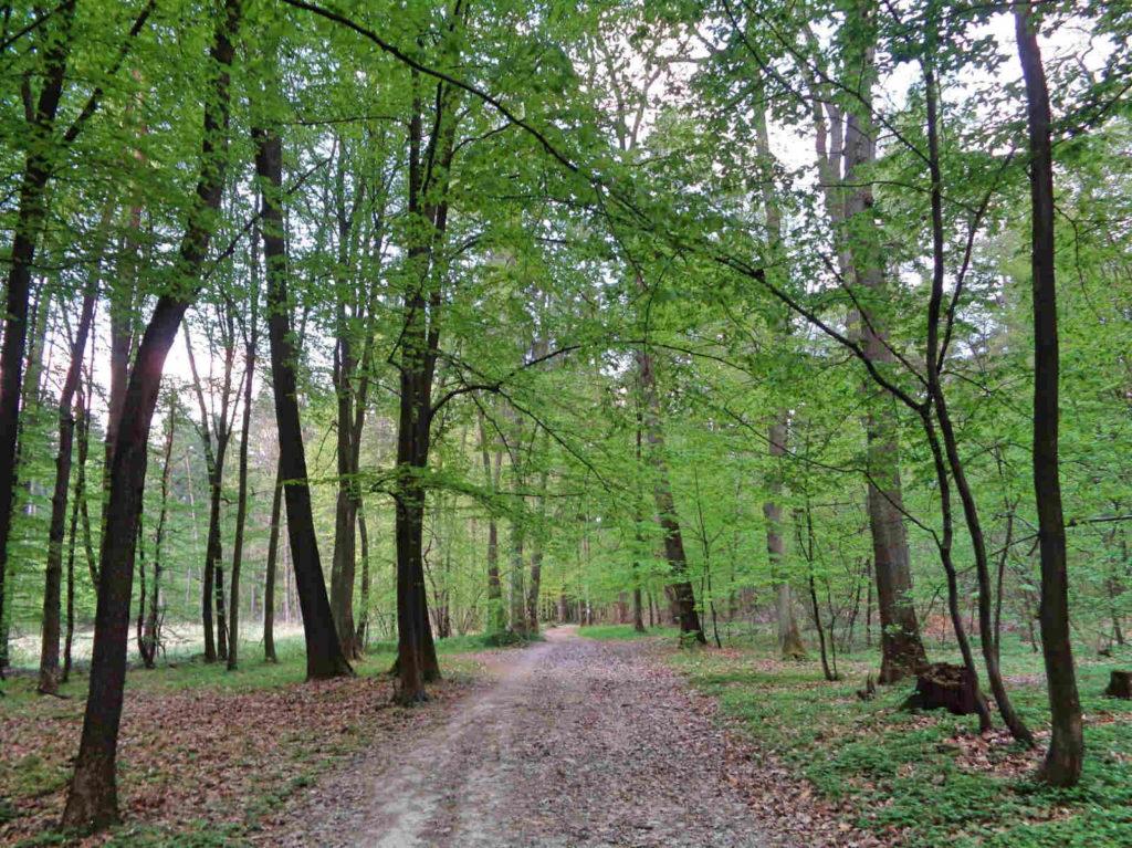 Las Zabierzowski, niebieski szlak nordic walking
