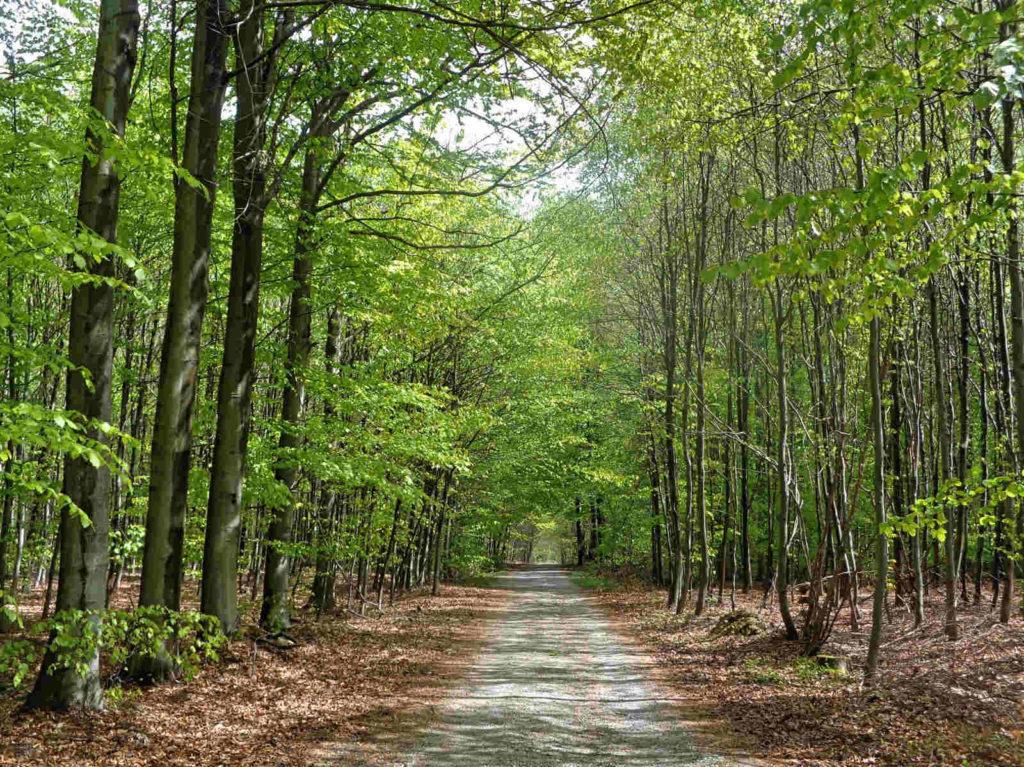 Las Zabierzowski, ścieżki