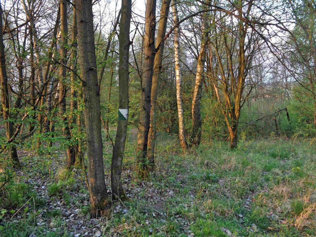 Las Zabierzowski, stan szlaków