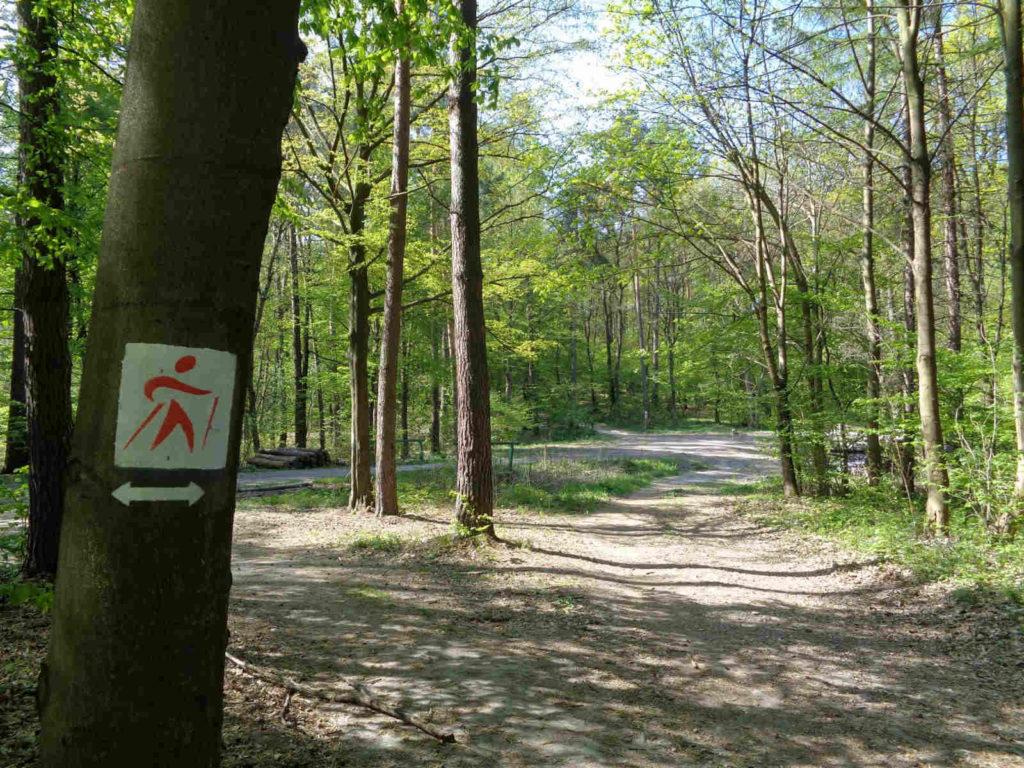 Las Zabierzowski, szlak nordic walking, czerwony