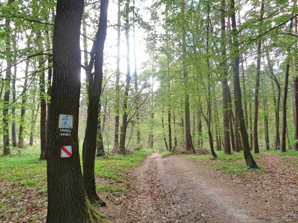 Las Zabierzowski, szlak nordic walking, niebieski