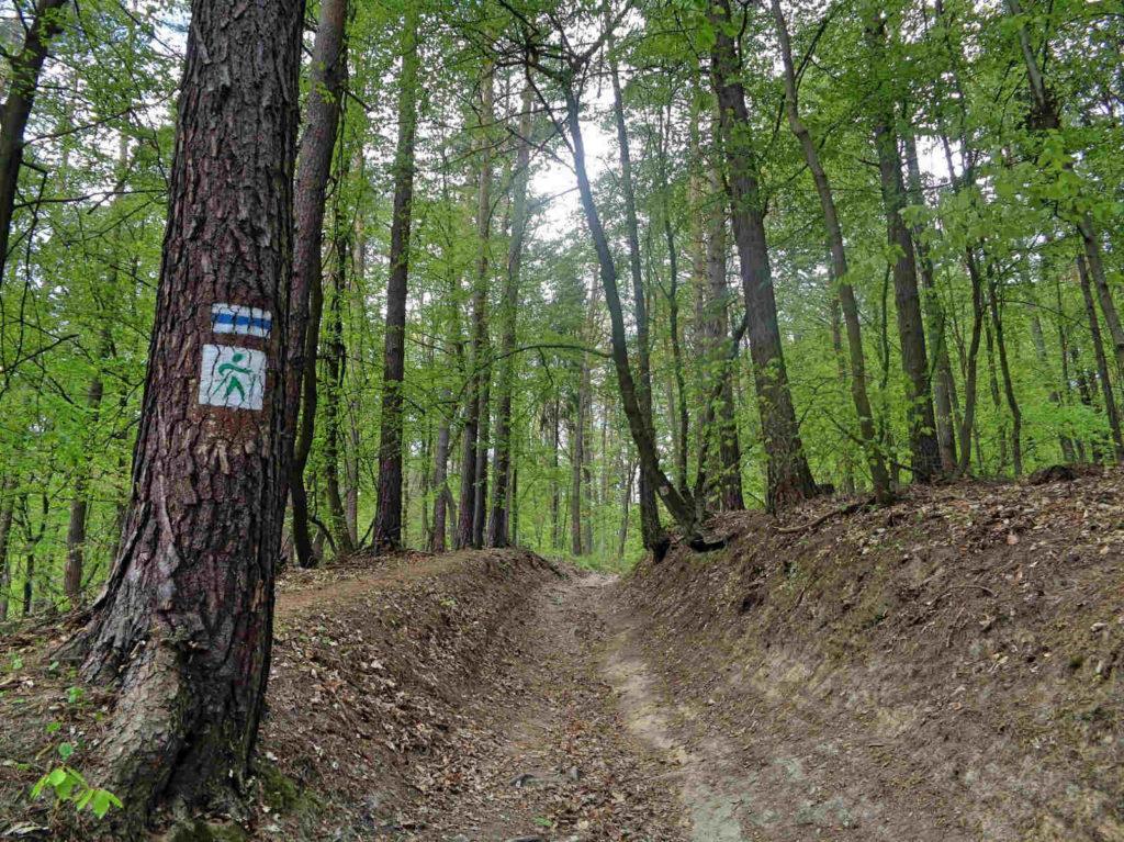 Las Zabierzowski, szlak nordic walking, zielony