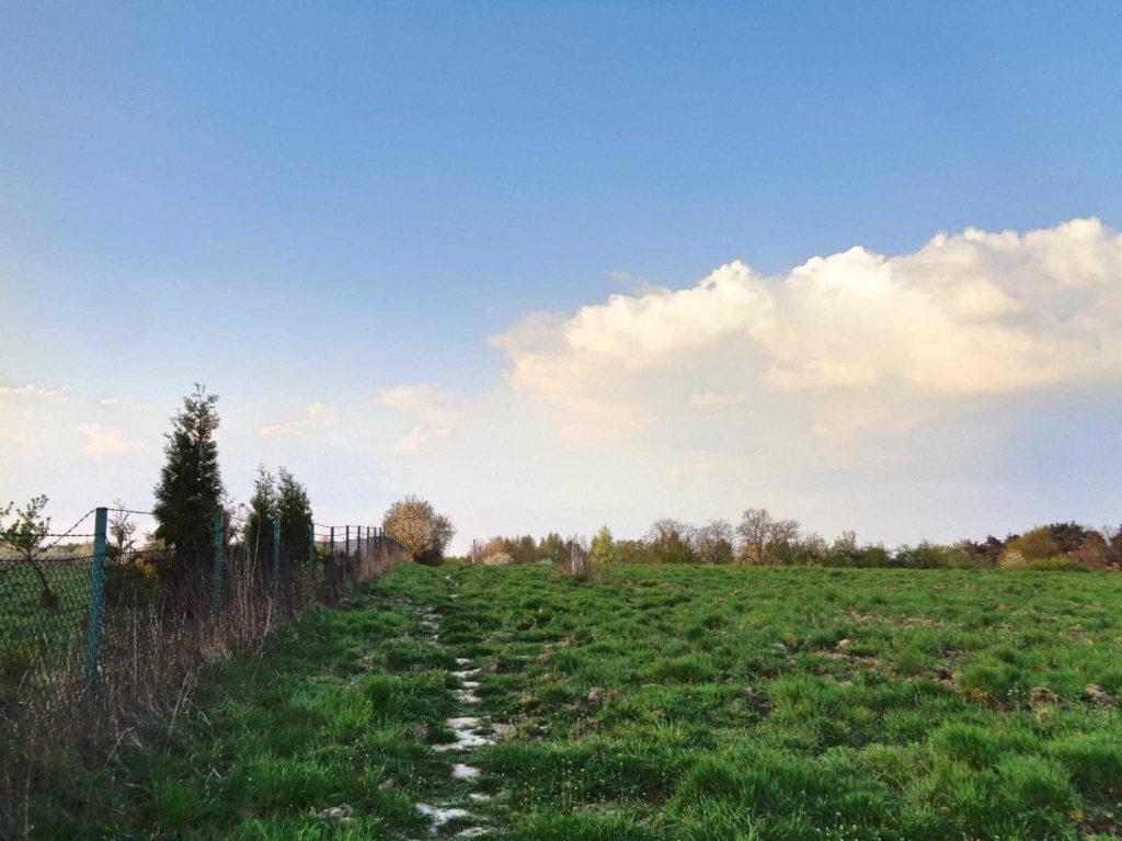 Las Zabierzowski, szlak zielony