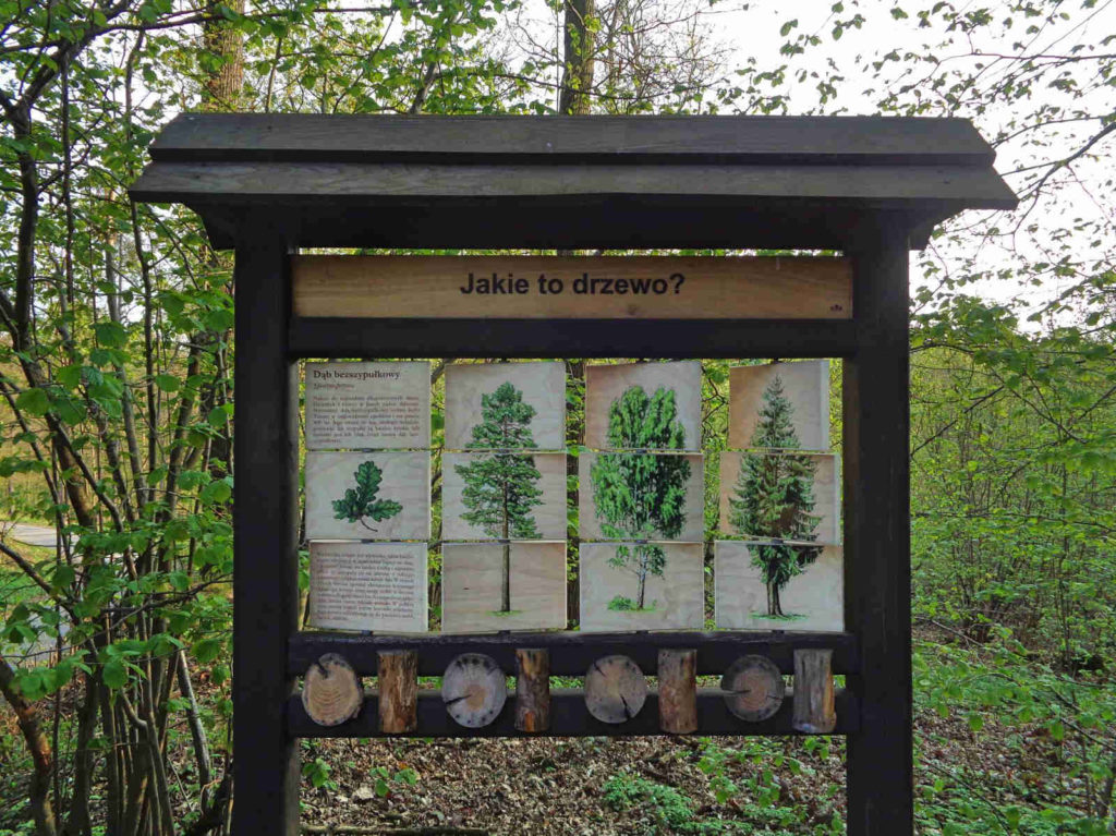 Las Zabierzowski. tablice edukacyjne