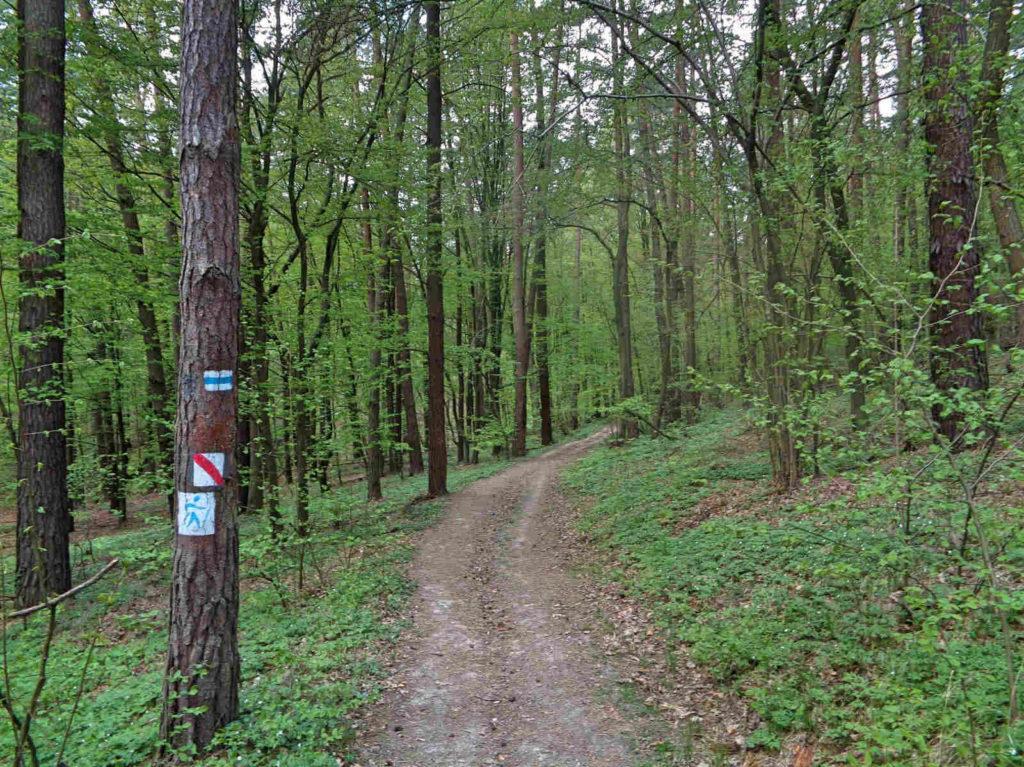Las Zabierzowski, zielony szlak nordic walking