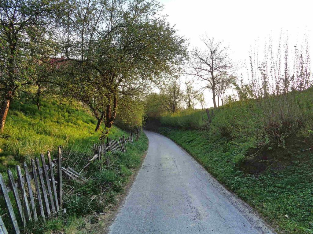 Las Zabierzowski, zielony szlak spacerowy