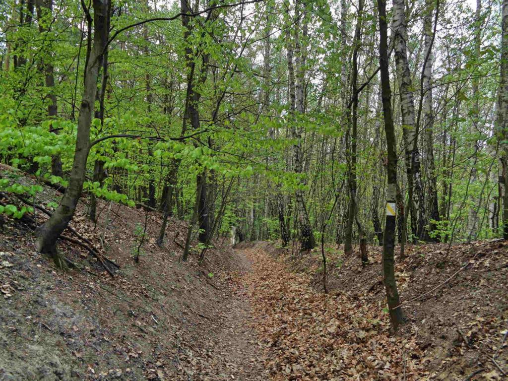 Las Zabierzowski, żółty szlak spacerowy