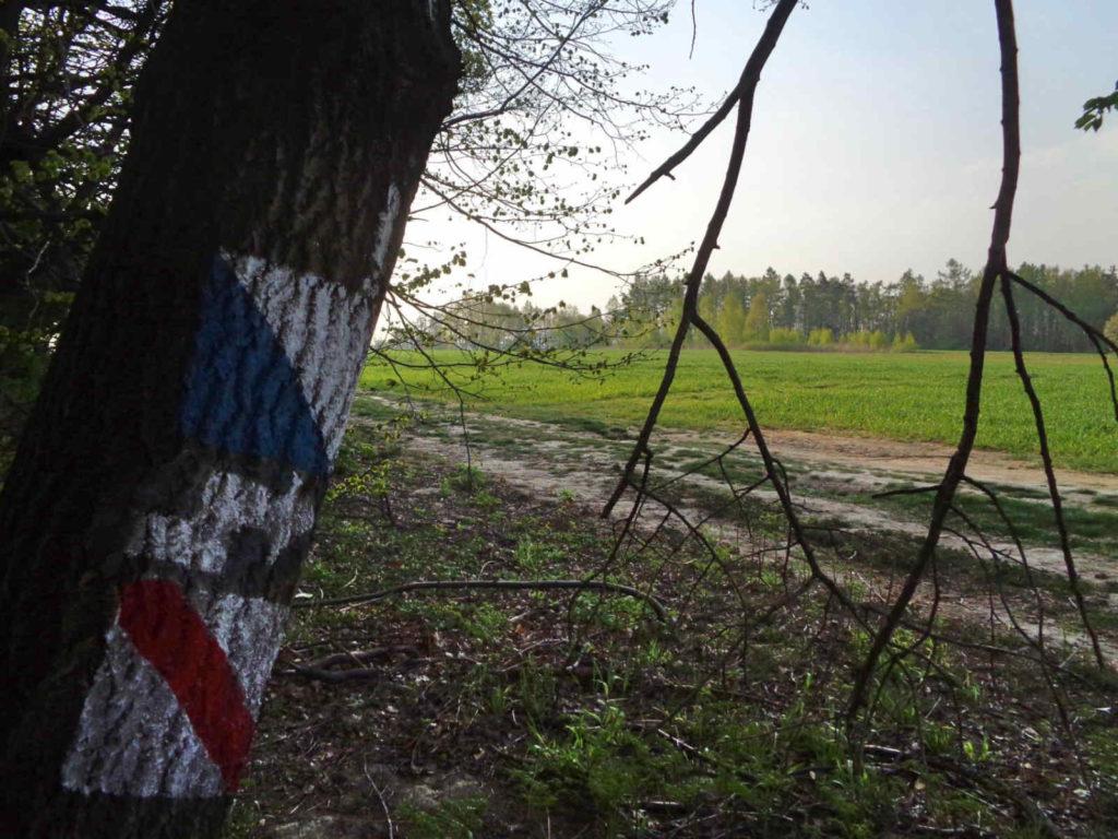 Niebieski szlak spacerowy, Las Zabierzowski