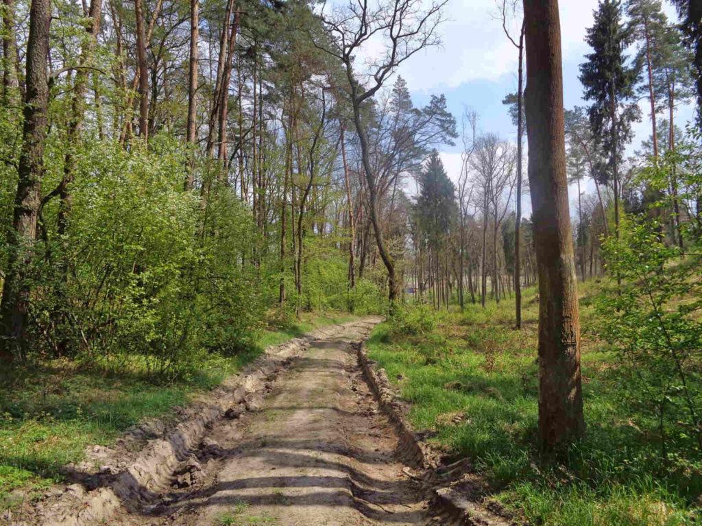 Nordic walking w Lesie Zabierzowskim
