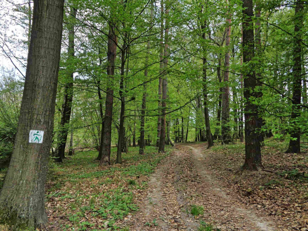 Zielone szlaki nordic walking, Las Zabierzowski
