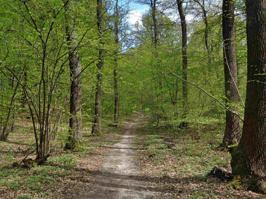 Zielony szlak nordic walking, Las Zabierzowski