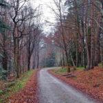 Las Bronaczowa, szlak zielony