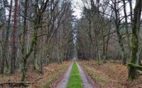 Puszcza Niepołomicka, zielony szlak
