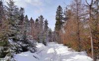 MSB w zimie