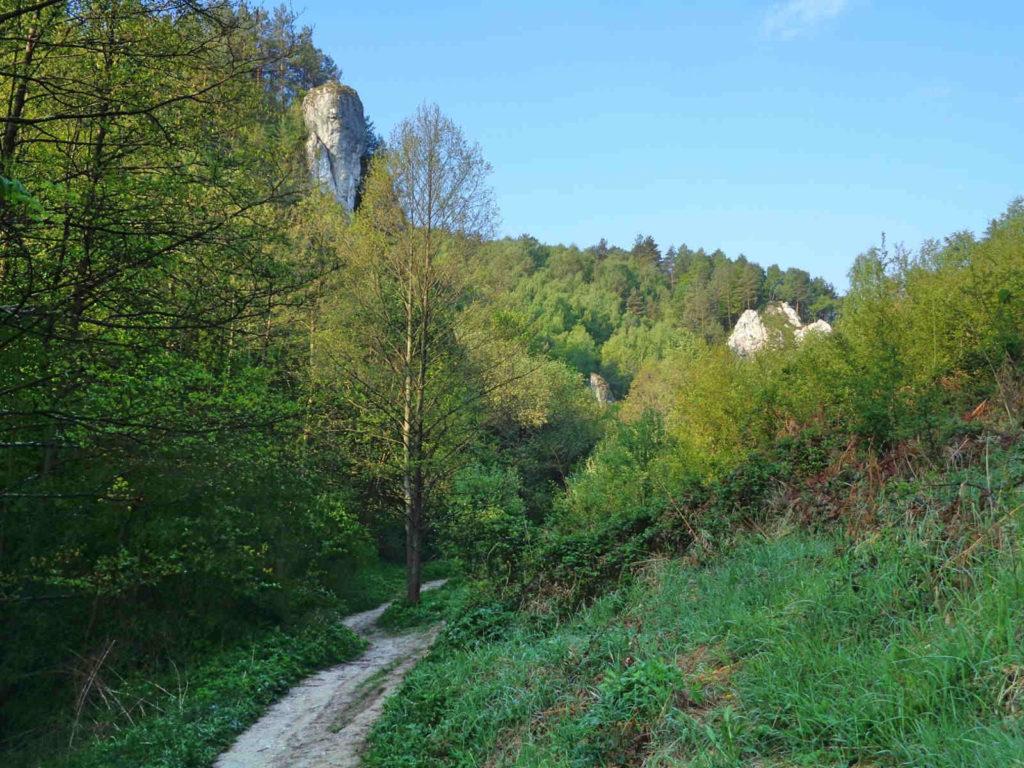 Dolina Kobylańska pod Krakowem