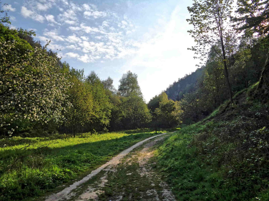 Dolina w Kobylanach