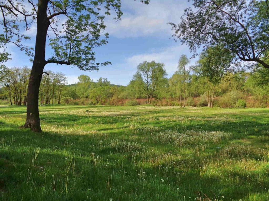 Wadowice, park nad Skawą