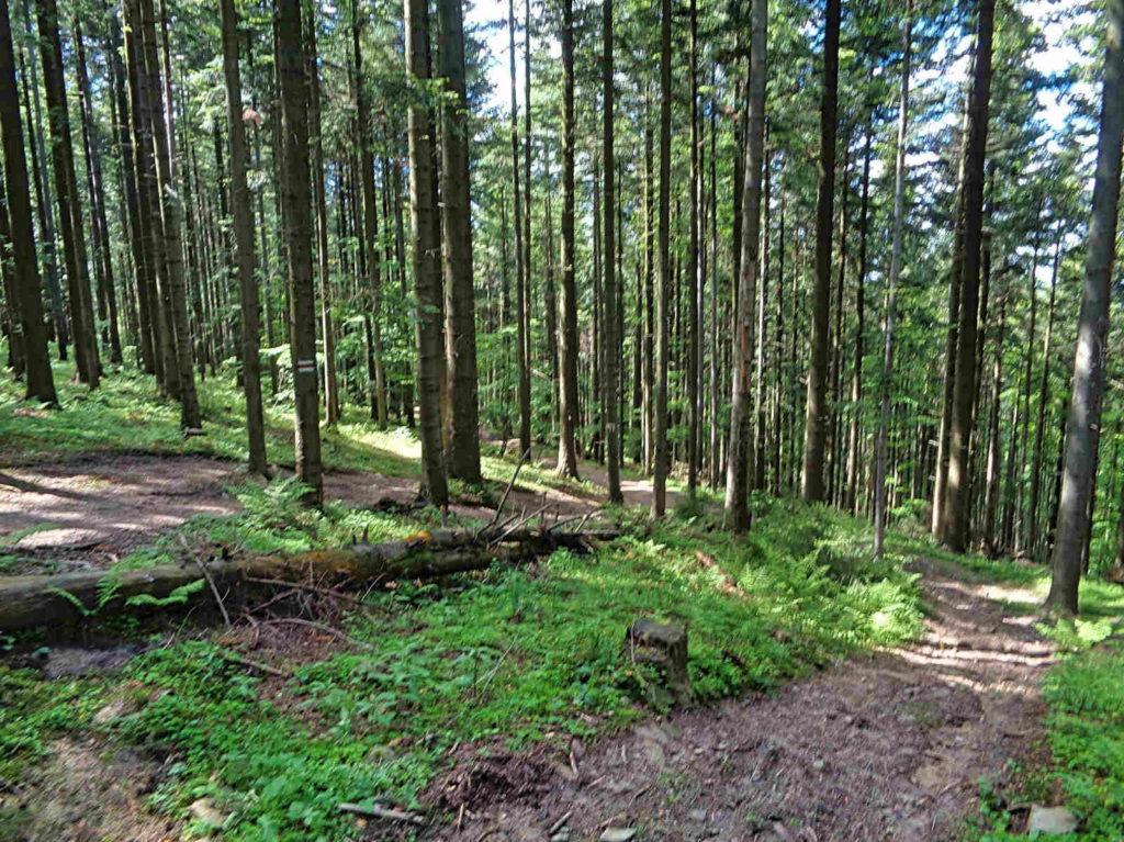 Wierzbanowska Góra, Mały Szlak Beskidzki