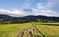 Ostra - Jasień, zielony szlak