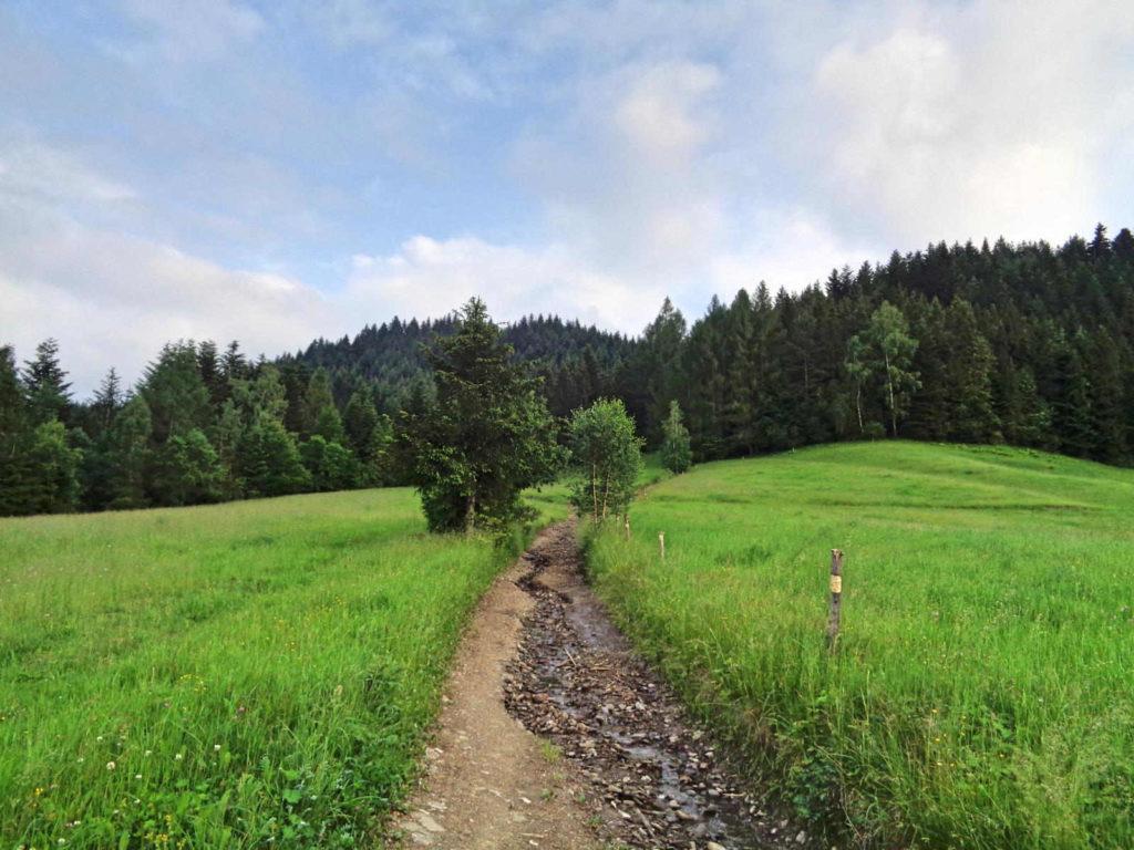 Zielony szlak Mszana - Jasień