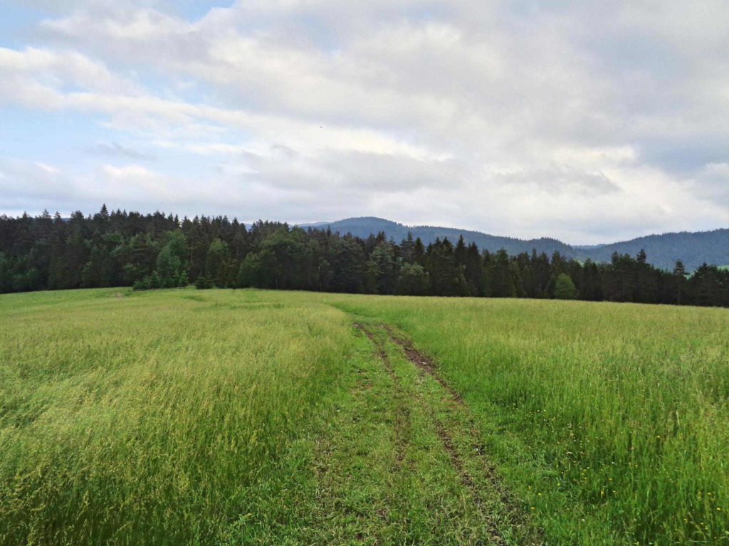 Zielony szlak Ostra - Jasień