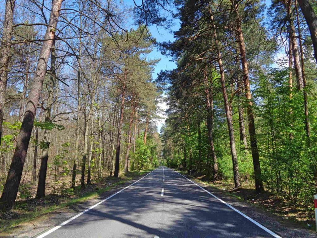 Droga Olkusz - Ogrodzieniec