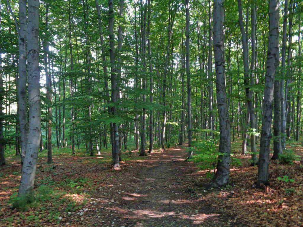 Klucze, lasy
