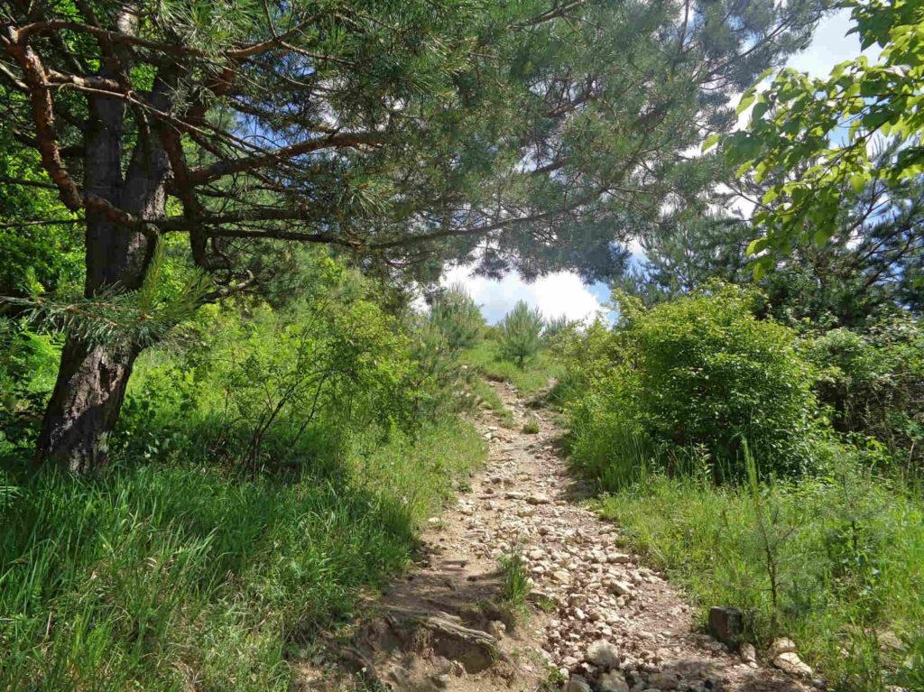 Podejście z pustyni na Czubatkę