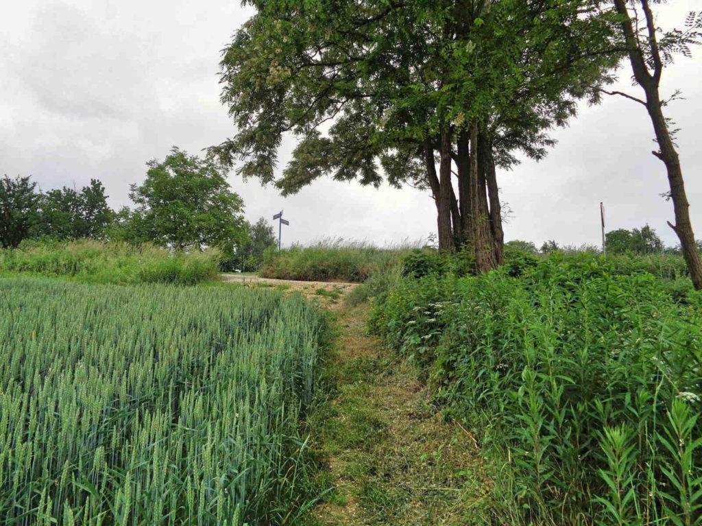Dojazdów, skrót między polami
