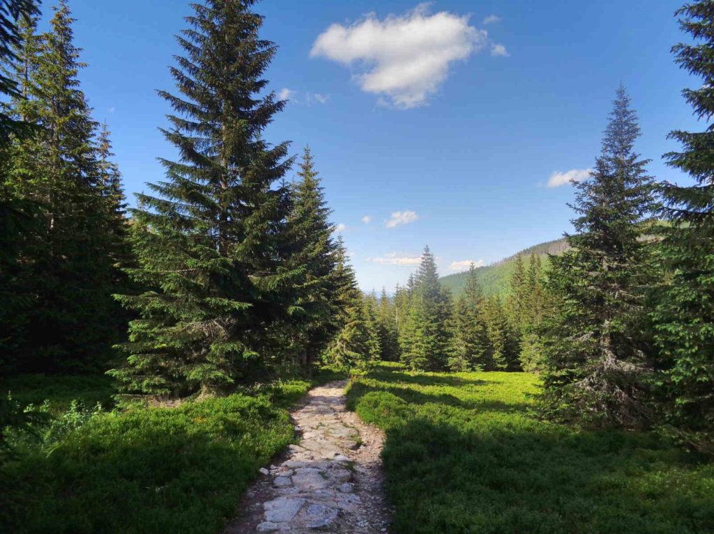 Szlak przez Wyżnią Dolinę Chochołowską