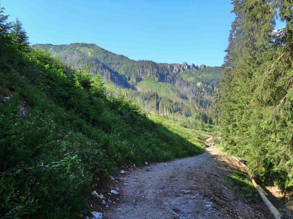 Zejście z Wołowca do Doliny Chochołowskiej