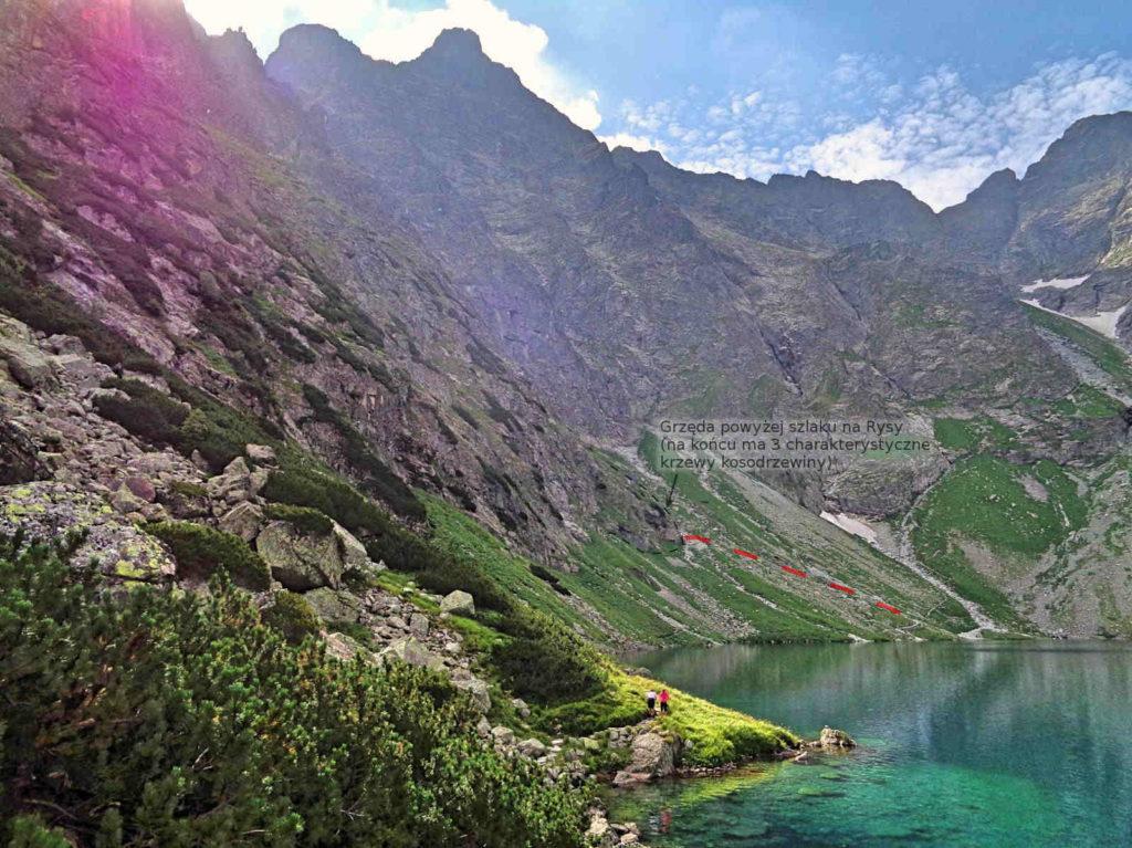 Białczańska Przełęcz Wyżnia, zejście ze szlaku