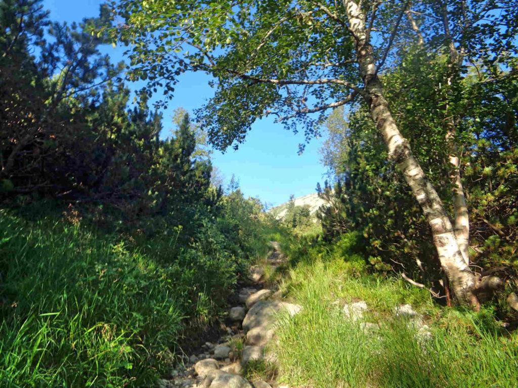 Łomnicki Staw, zielony szlak