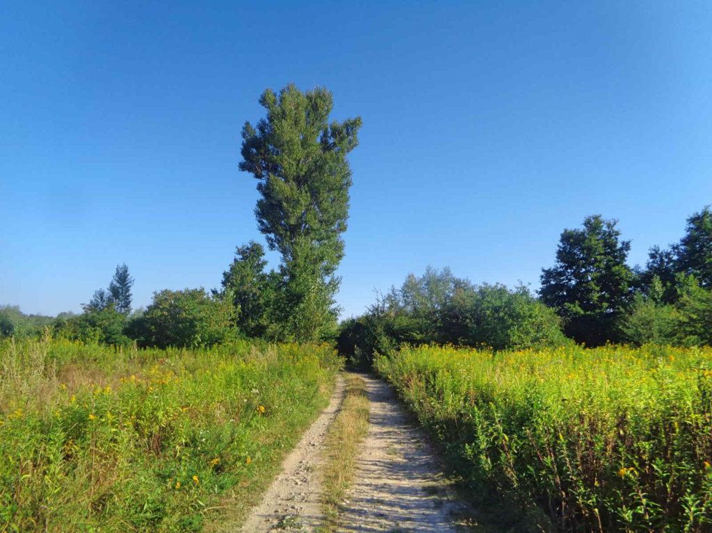Velo Dunajec, polne drogi