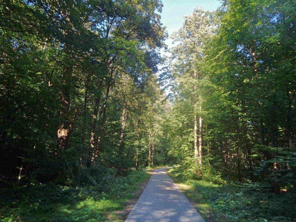 Velo Dunajec, leśna droga
