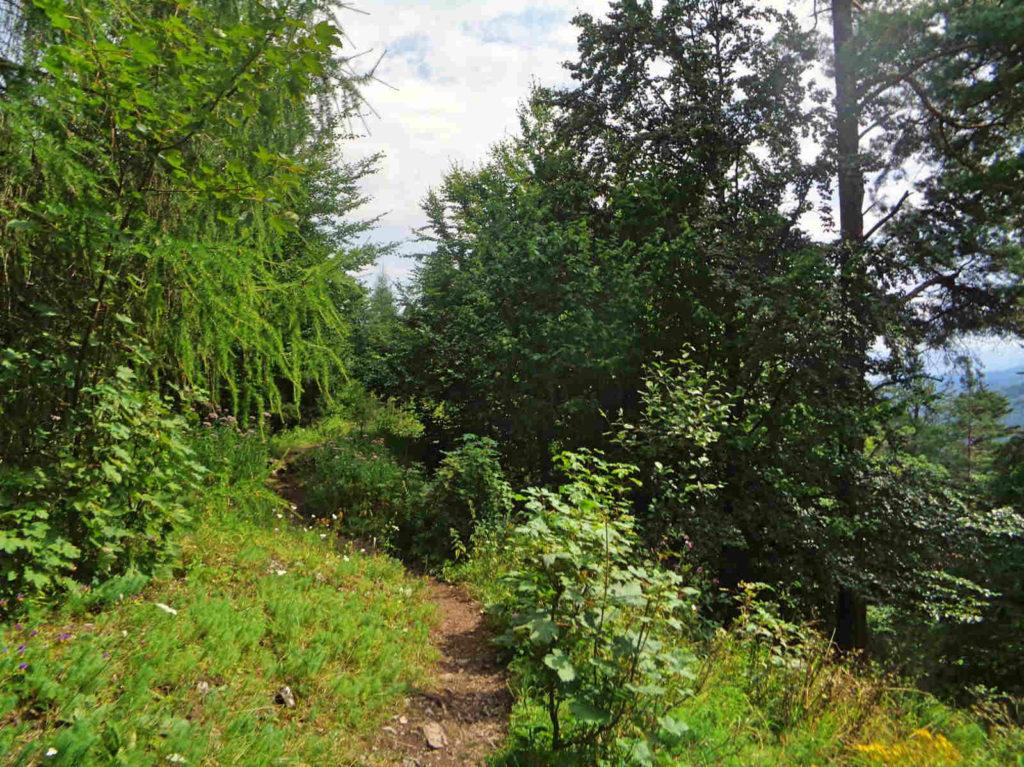 Szlak nad Wąwozem Kysel