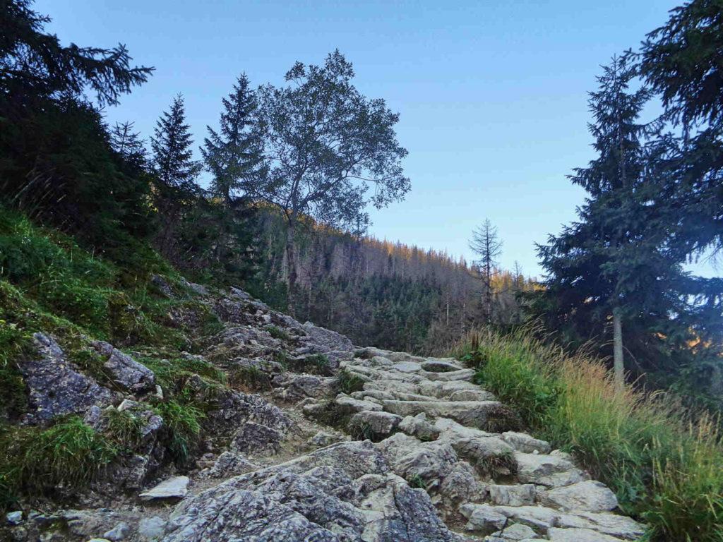 Dolina Jaworzynka, żółty szlak