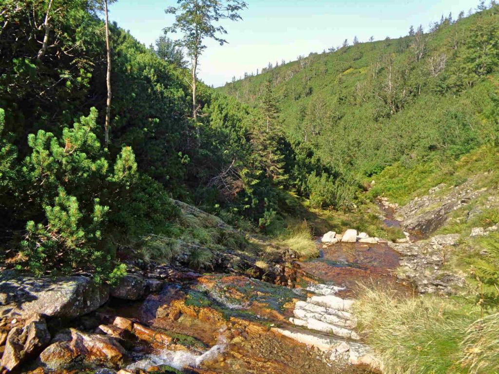 Las Gąsienicowy, potok