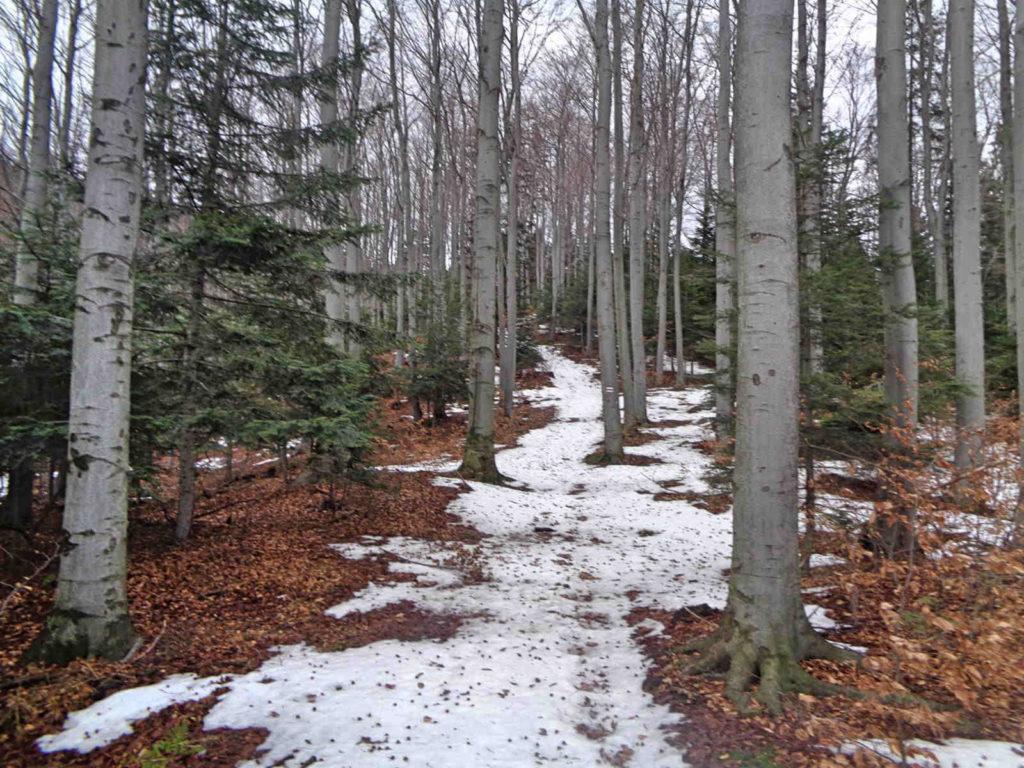 Ciecień w zimie, szlak od Skrzydlnej