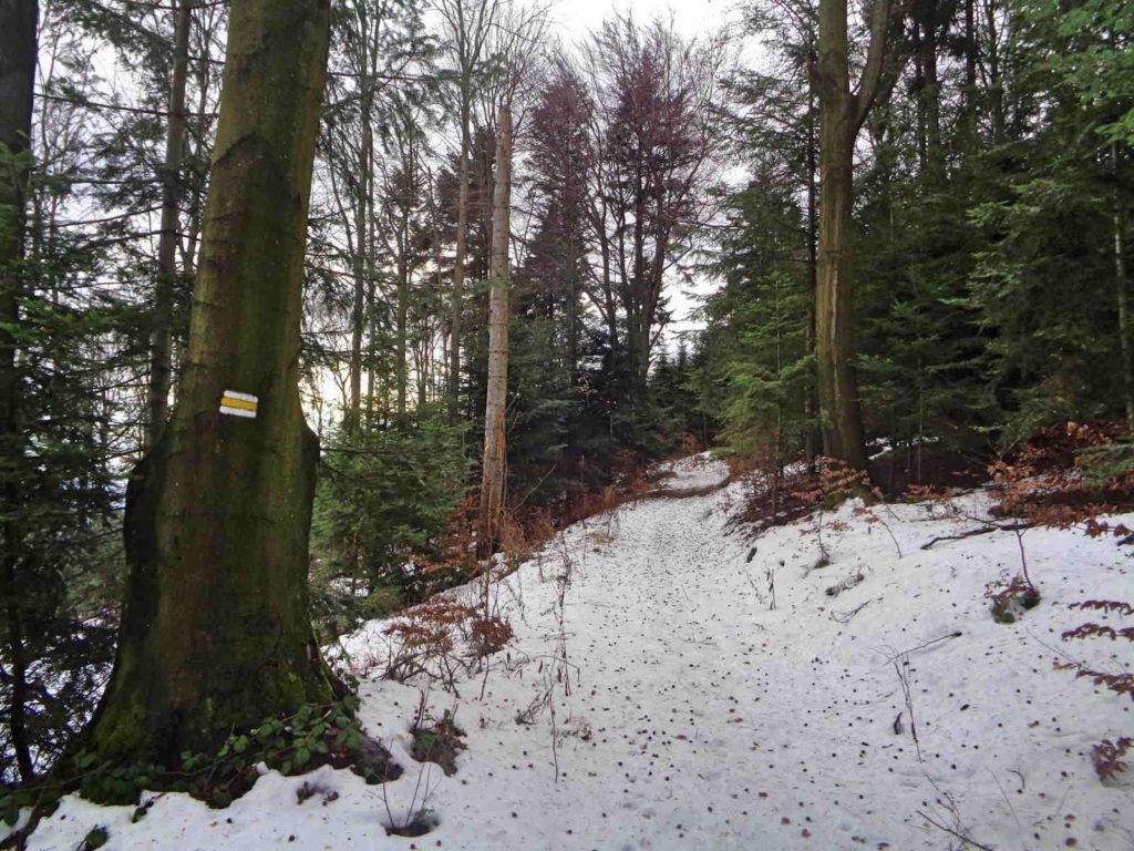 Ciecień w zimie, żółty szlak