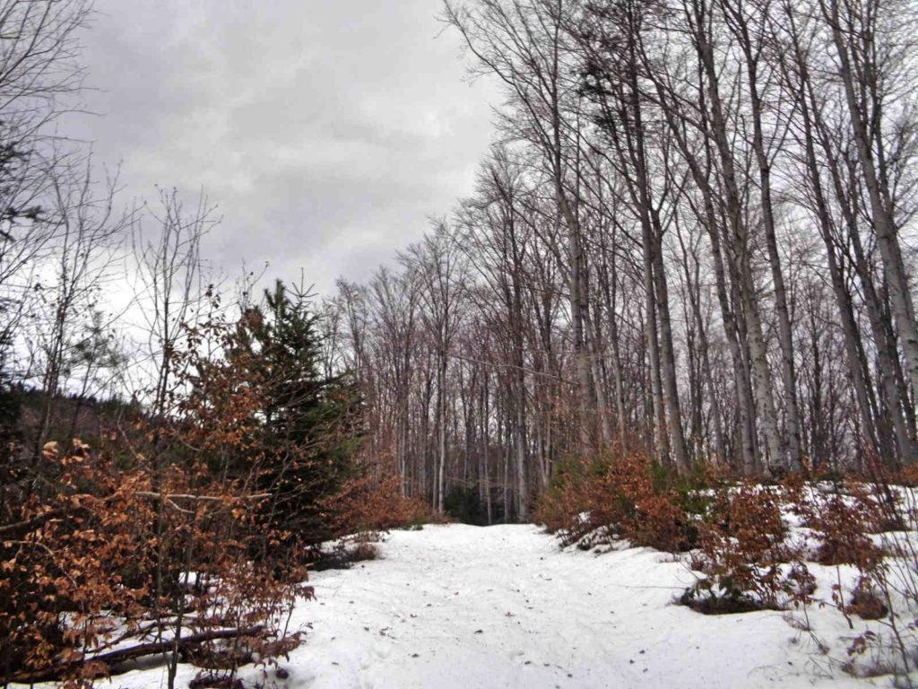 Ciecień zimą, szlak od Skrzydlnej