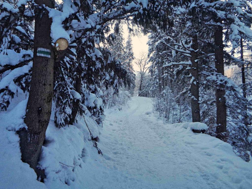 Dolina Olczyska, szlak zimą
